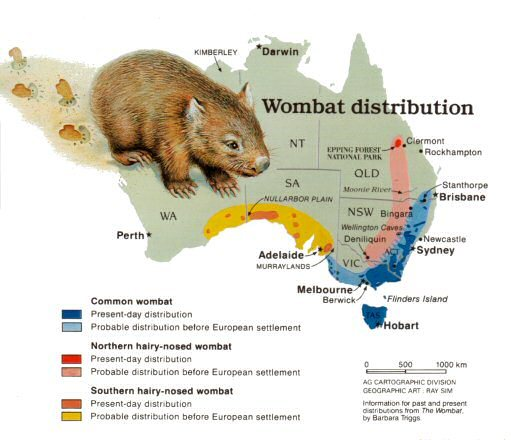 Animal Research (Wombat)